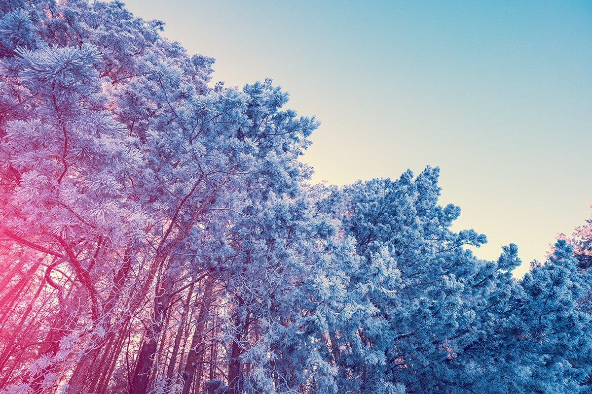 四季折々の美しい景色を、未来につなげていきたい。